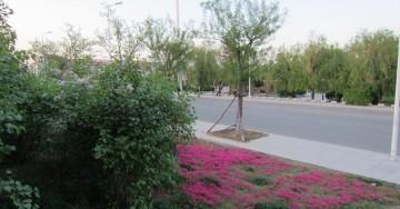 城市公园景观图片欣赏0